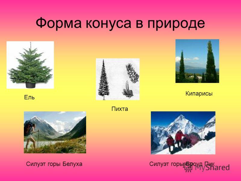 Форма конуса в природе Ель Пихта Кипарисы Силуэт горы БелухаСилуэт горы Броуд Пик