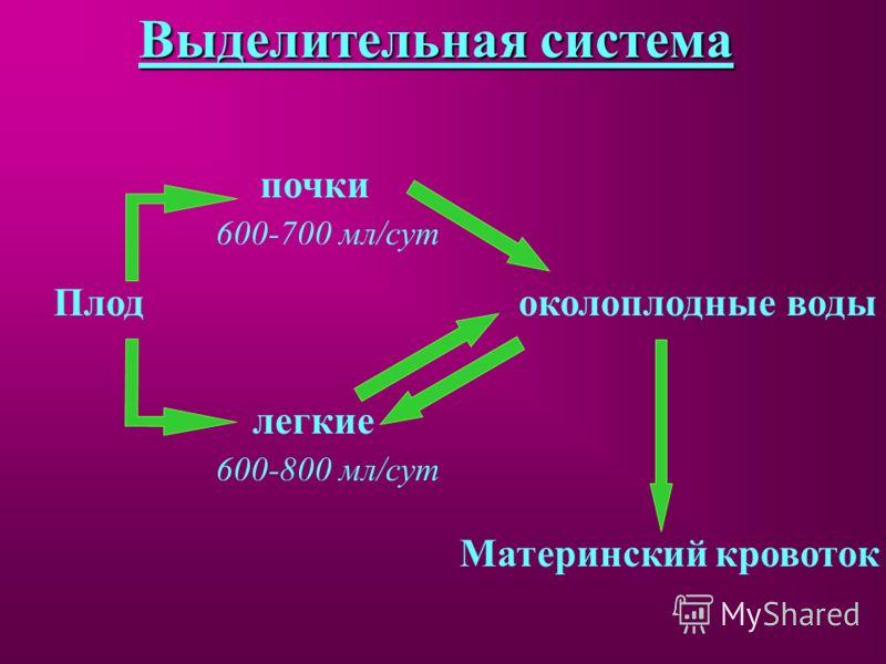 Выделительная система околоплодные воды Плод почки 600-700 мл/сут легкие 600-800 мл/сут Материнский кровоток