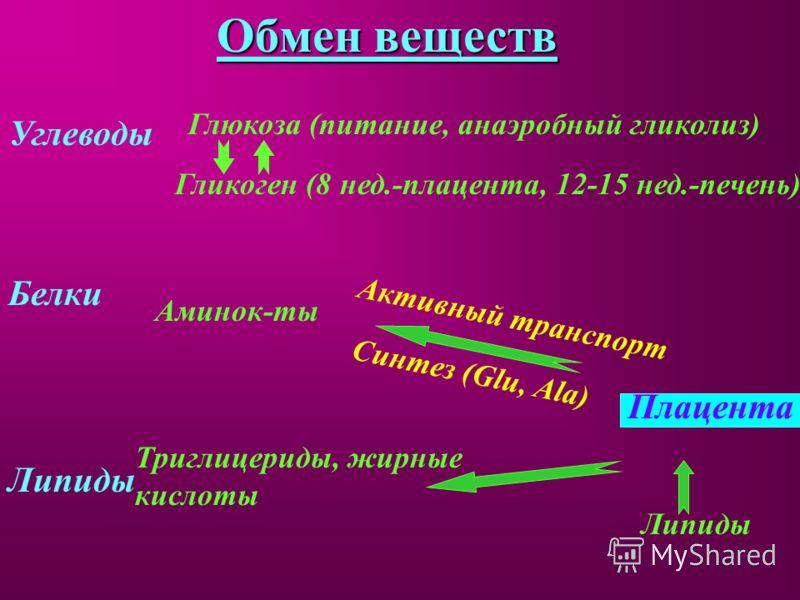Обмен веществ Углеводы Глюкоза (питание, анаэробный гликолиз) Гликоген (8 нед.-плацента, 12-15 нед.-печень) Белки Аминок-ты Плацента Активный транспорт Синтез (Glu, Ala) Липиды Триглицериды, жирные кислоты