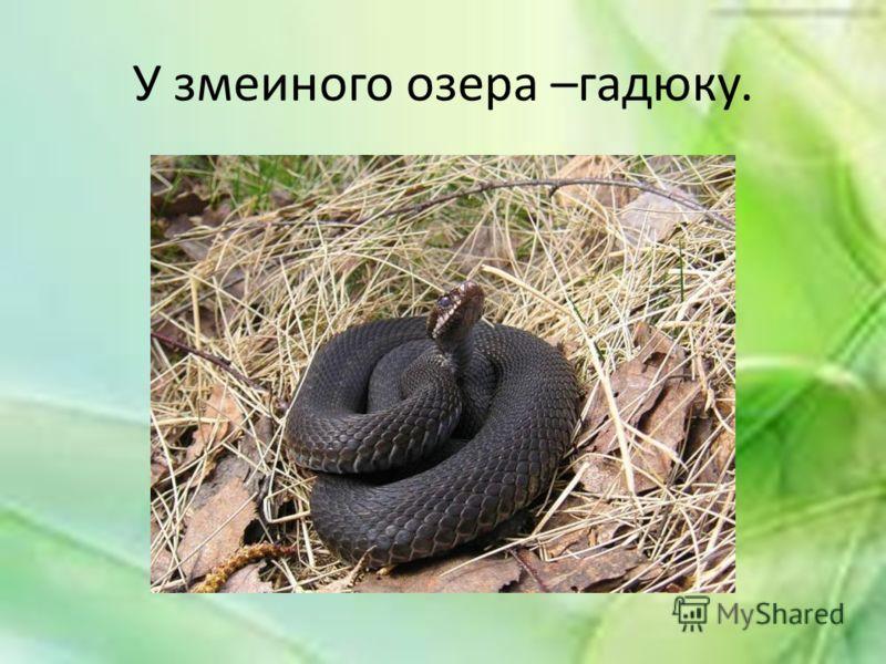У змеиного озера –гадюку.
