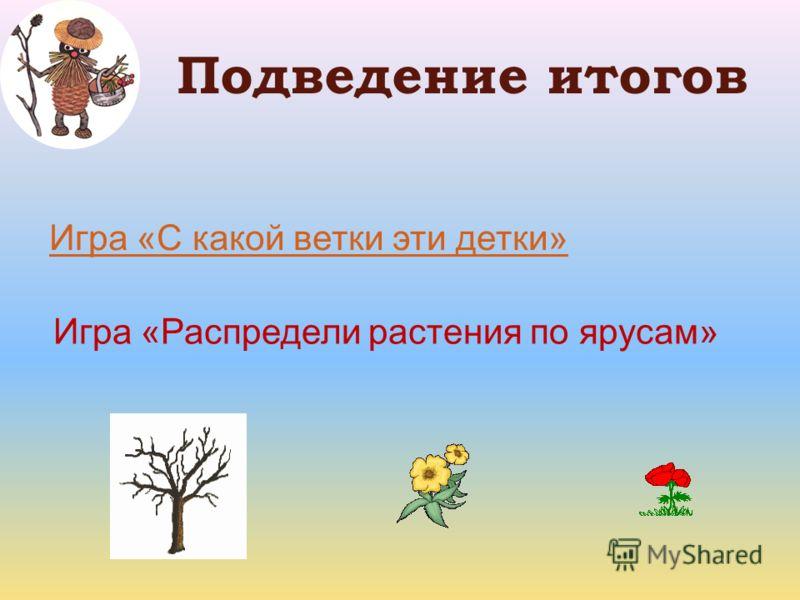 Подведение итогов Игра «С какой ветки эти детки» Игра «Распредели растения по ярусам»