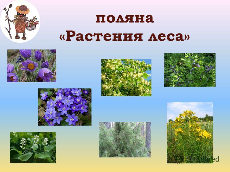 поляна «Растения леса»