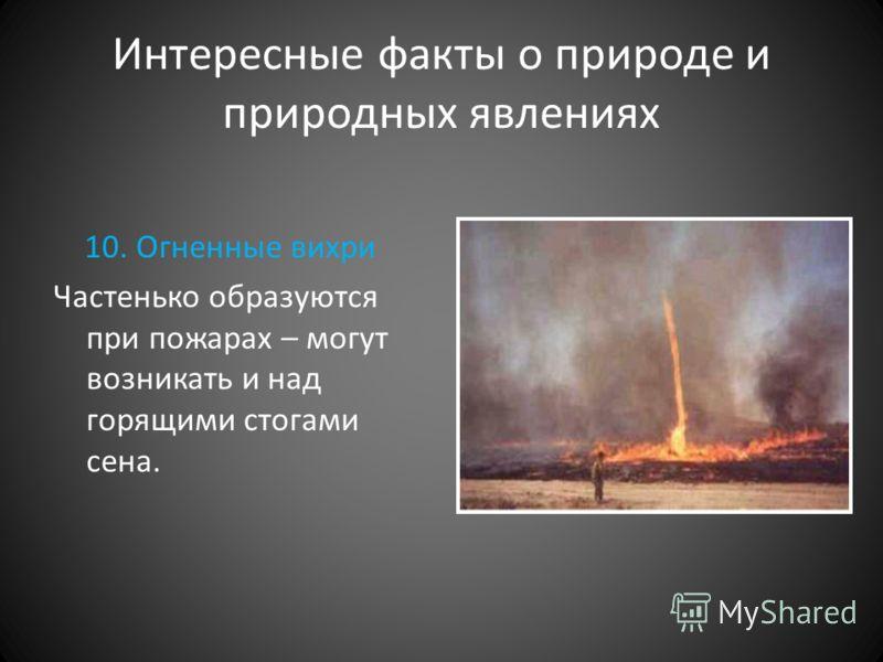 Интересные факты о природе и природных явлениях 10. Огненные вихри Частенько образуются при пожарах – могут возникать и над горящими стогами сена.