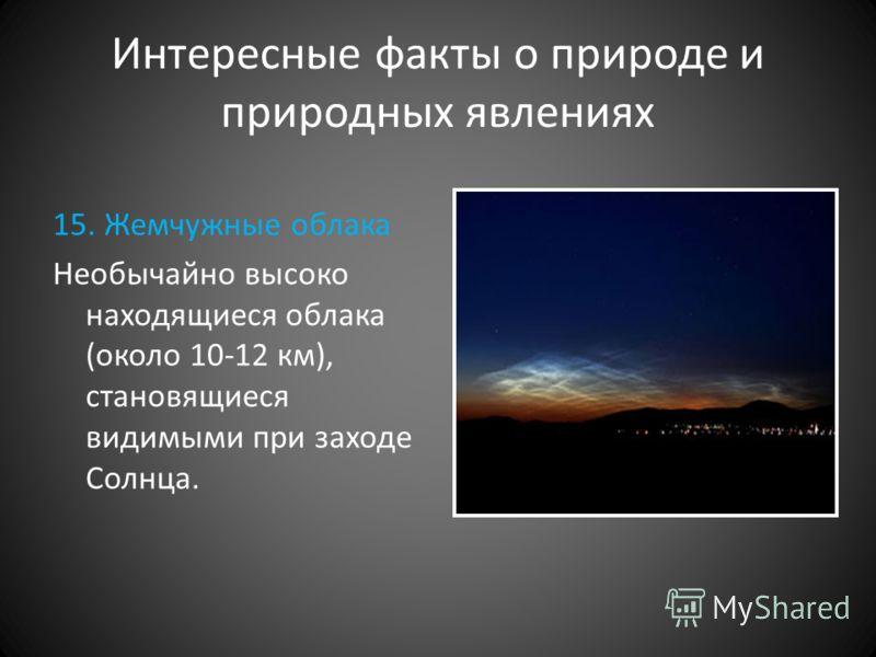 Интересные факты о природе и природных явлениях 15. Жемчужные облака Необычайно высоко находящиеся облака (около 10-12 км), становящиеся видимыми при заходе Солнца.