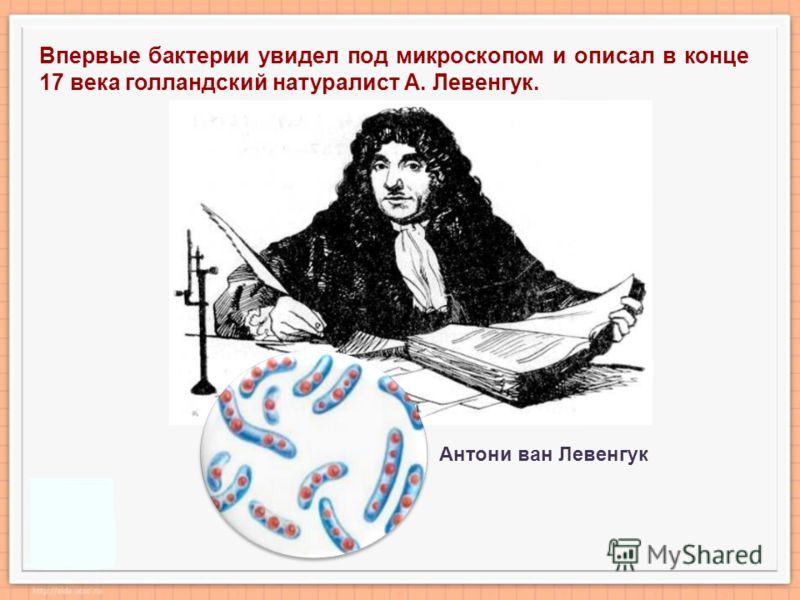 Впервые бактерии увидел под микроскопом и описал в конце 17 века голландский натуралист А. Левенгук. Антони ван Левенгук