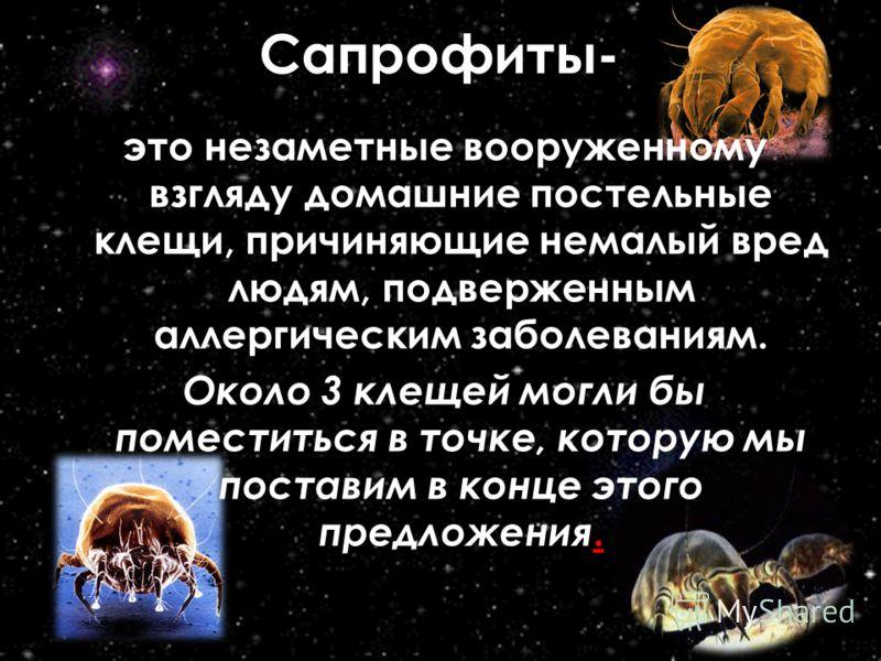 Сапрофит