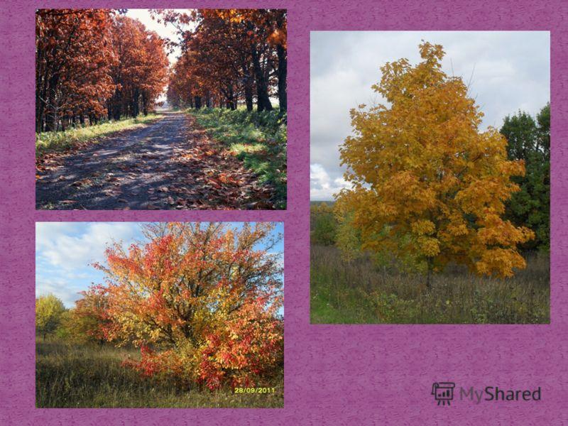 Звуки осеннего леса скачать бесплатно без регистрации