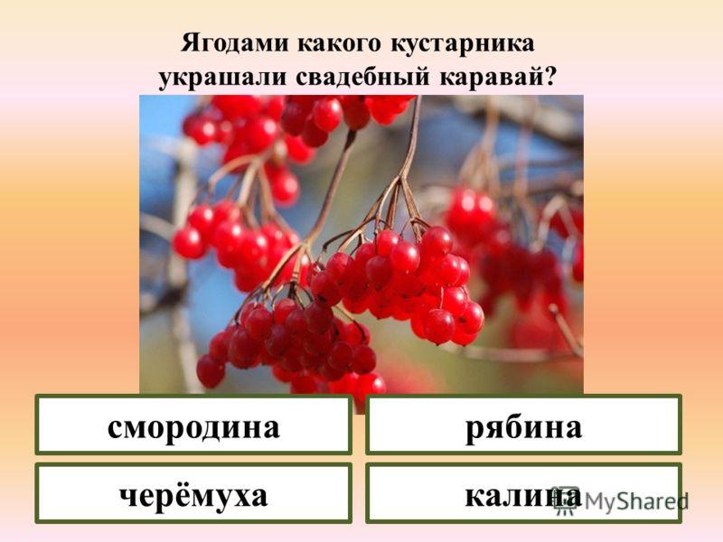 Это дерево дарит пчёлам нектар, людям – ягоды, которые созревают в августе-сентябре. вишнясирень черёмухакалина