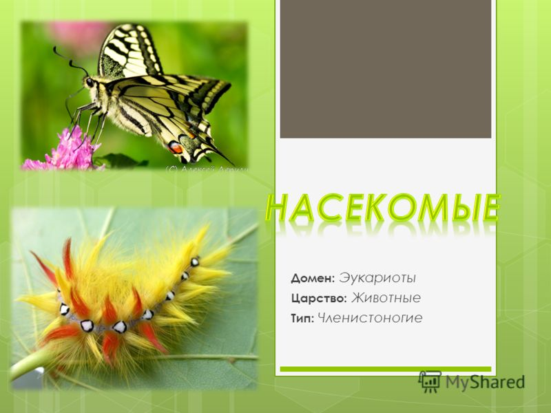 Домен: Эукариоты Царство: Животные Тип: Членистоногие