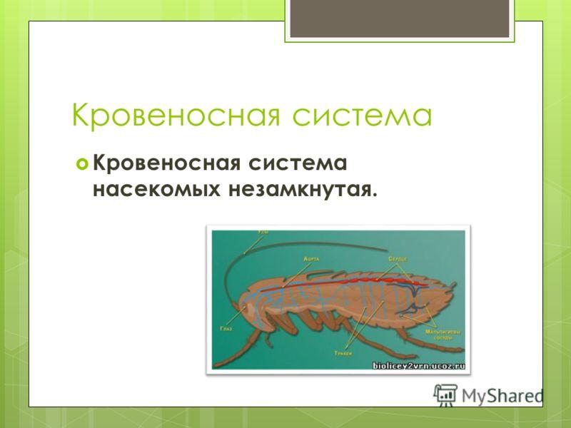 Кровеносная система Кровеносная система насекомых незамкнутая.