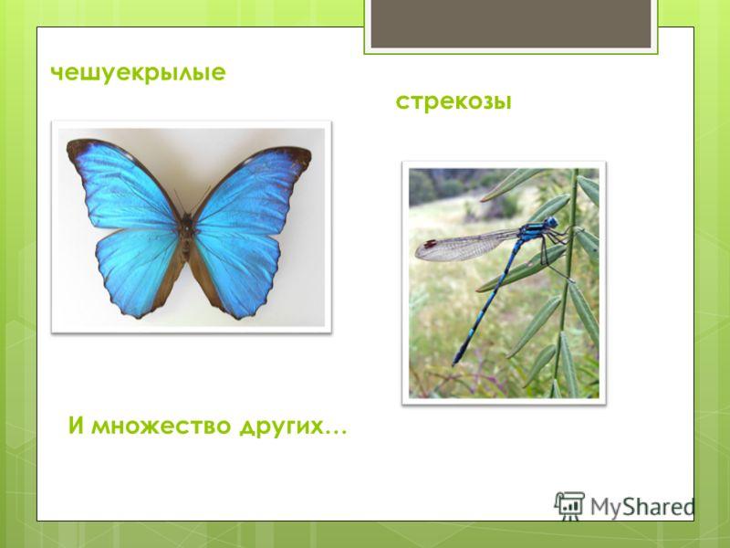 чешуекрылые стрекозы И множество других…