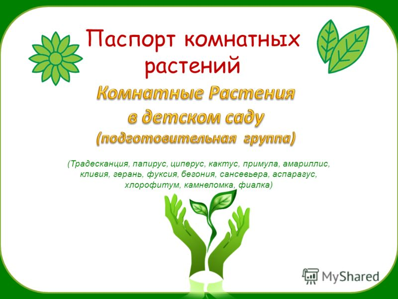 Паспорт комнатных растений (Традесканция, папирус, циперус, кактус, примула, амариллис, кливия, герань, фуксия, бегония, сансевьера, аспарагус, хлорофитум, камнеломка, фиалка)