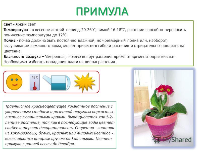 ПРИМУЛА ПРИМУЛА Свет - яркий свет Температура - в весенне-летний период 20-26°C, зимой 16-18°C, растение способно переносить понижение температуры до 12°C. Полив - почва должна быть постоянно влажной, но чрезмерный полив или, наоборот, высушивание зе