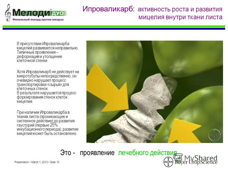 Presentation March 1, 2013 Slide 10 В присутствии Ипроваликарба мицелий развивается неправильно. Типичные проявления – деформация и утолщение клеточной стенки. При наличии Ипроваликарба в тканях листа (проникающее и системное действие) до развития га