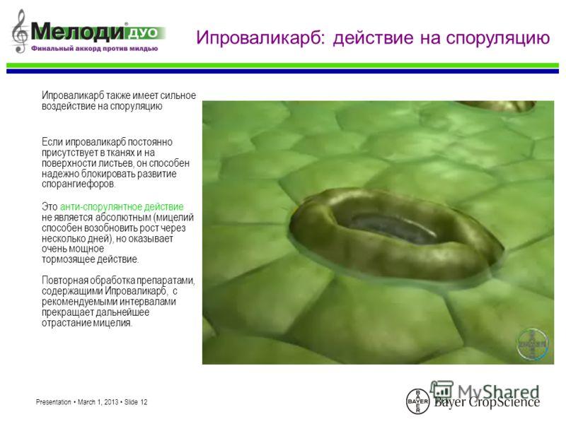 Presentation March 1, 2013 Slide 12 Ипроваликарб: действие на споруляцию Ипроваликарб также имеет сильное воздействие на споруляцию Это анти-спорулянтное действие не является абсолютным (мицелий способен возобновить рост через несколько дней), но ока