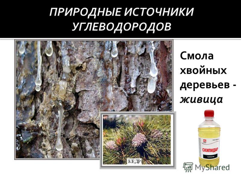 Смола хвойных деревьев - живица