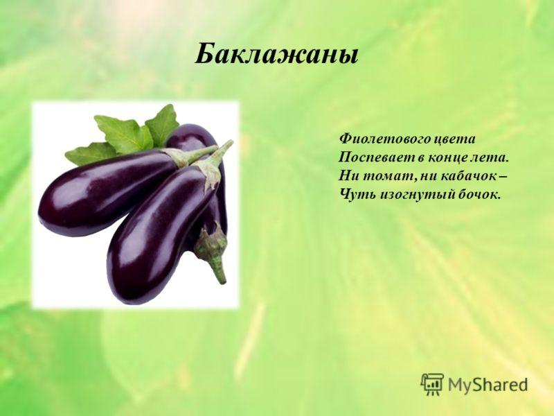 Баклажаны Фиолетового цвета Поспевает в конце лета. Ни томат, ни кабачок – Чуть изогнутый бочок.