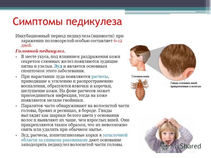 Симптомы педикулеза Инкубационный период педикулеза (вшивости) при заражении половозрелой особью составляет 6-12 дней. Головной педикулез. В месте укуса, под влиянием раздражения кожи секретом слюнных желез появляются зудящие пятна и узелки. Зуд и яв