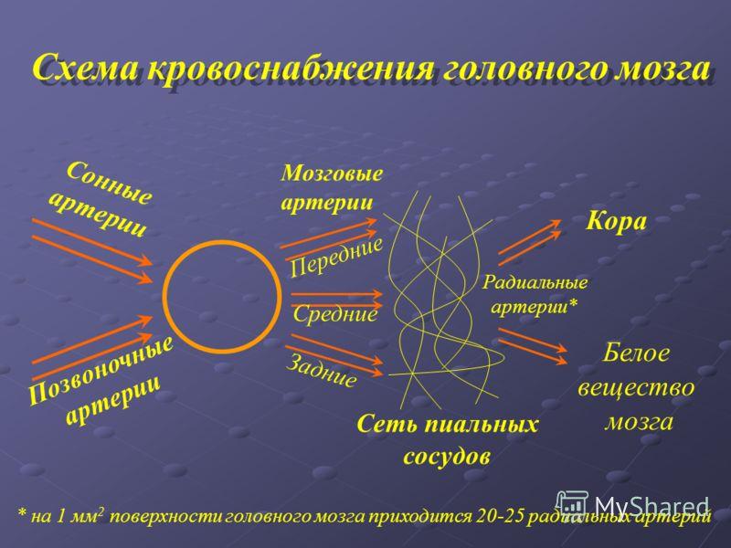 Сонные артерии Позвоночные артерии Передние Средние Задние Мозговые артерии Сеть пиальных сосудов Кора Белое вещество мозга Радиальные артерии* Схема кровоснабжения головного мозга * на 1 мм 2 поверхности головного мозга приходится 20-25 радиальных а