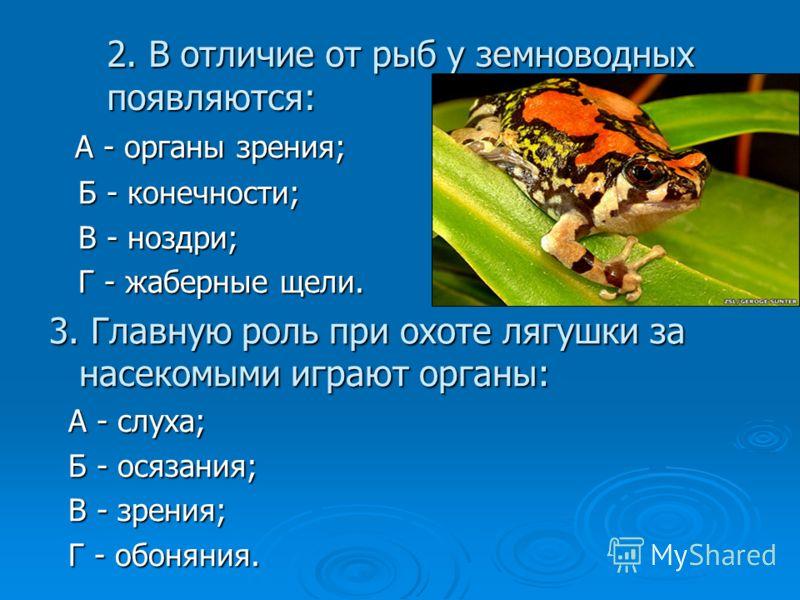 2. В отличие от рыб у земноводных появляются: А - органы зрения; А - органы зрения; Б - конечности; Б - конечности; В - ноздри; В - ноздри; Г - жаберные щели. Г - жаберные щели. 3. Главную роль при охоте лягушки за насекомыми играют органы: А - слуха
