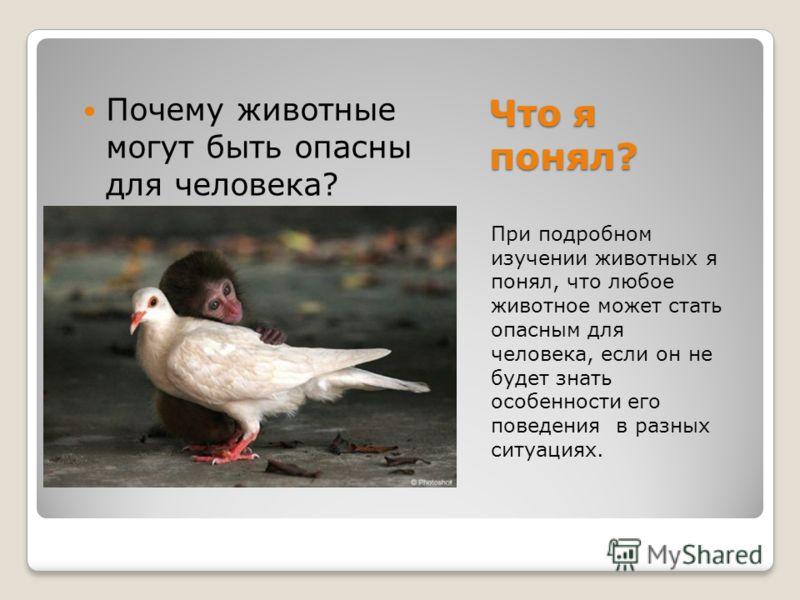 Что я понял? При подробном изучении животных я понял, что любое животное может стать опасным для человека, если он не будет знать особенности его поведения в разных ситуациях. Почему животные могут быть опасны для человека?