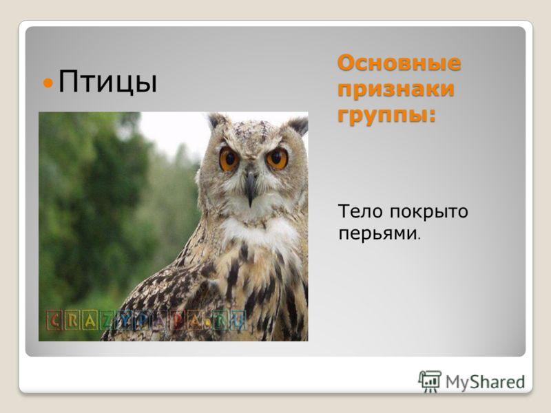Основные признаки группы: Тело покрыто перьями. Птицы