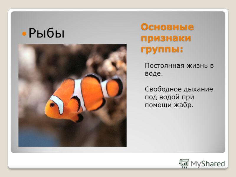 Основные признаки группы: Постоянная жизнь в воде. Свободное дыхание под водой при помощи жабр. Рыбы