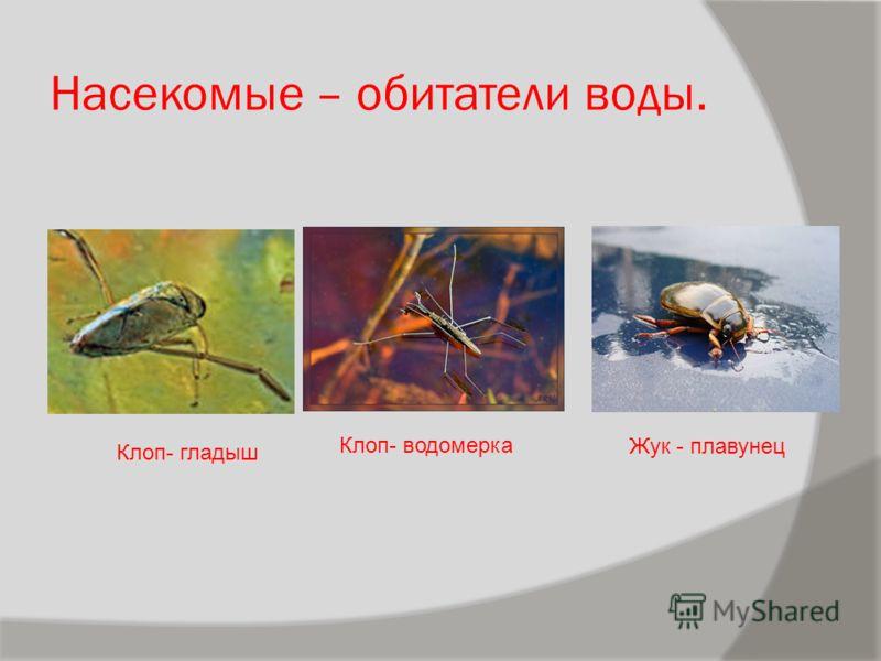 Типы развития насекомых типы развития