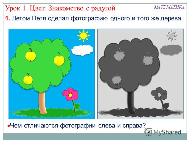 Урок 1. Цвет. Знакомство с радугой Чем отличаются фотографии слева и справа? МАТЕМАТИКА 1. Летом Петя сделал фотографию одного и того же дерева.