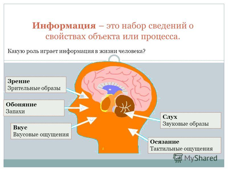 Информация – это набор сведений о свойствах объекта или процесса. Какую роль играет информация в жизни человека? Зрение Зрительные образы Обоняние Запахи Вкус Вкусовые ощущения Слух Звуковые образы Осязание Тактильные ощущения