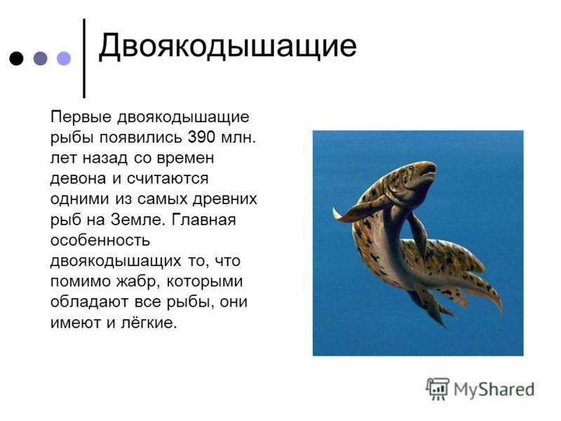 Двоякодышащие Первые двоякодышащие рыбы появились 390 млн. лет назад со времен девона и считаются одними из самых древних рыб на Земле. Главная особенность двоякодышащих то, что помимо жабр, которыми обладают все рыбы, они имеют и лёгкие.
