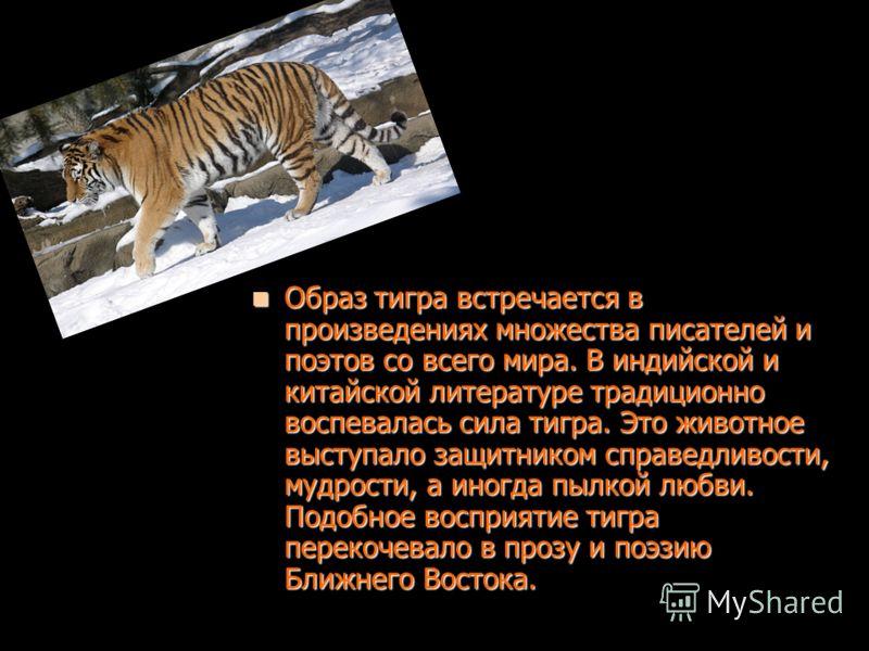 Образ тигра встречается в произведениях множества писателей и поэтов со всего мира. В индийской и китайской литературе традиционно воспевалась сила тигра. Это животное выступало защитником справедливости, мудрости, а иногда пылкой любви. Подобное вос