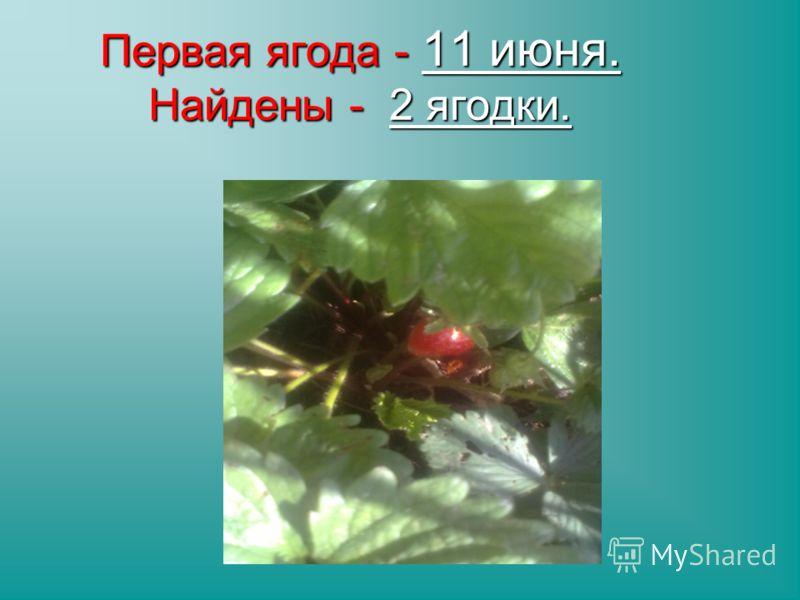 Первая ягода- 11 июня. Найдены - 2 ягодки. Первая ягода - 11 июня. Найдены - 2 ягодки.