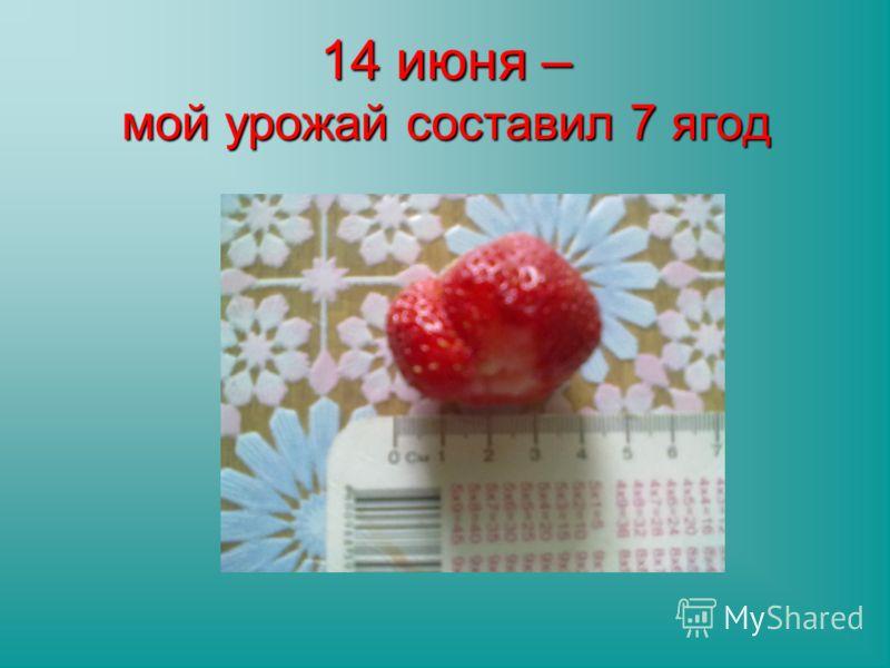 14 июня – мой урожай составил 7 ягод