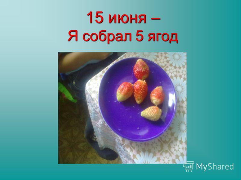 15 июня – Я собрал 5 ягод
