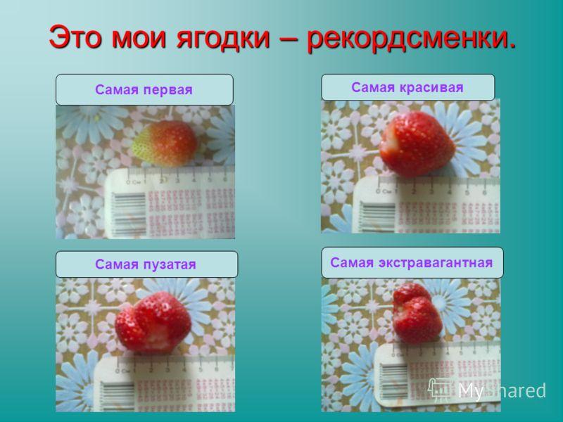 Это мои ягодки – рекордсменки. Самая пузатая Самая красивая Самая экстравагантная Самая первая