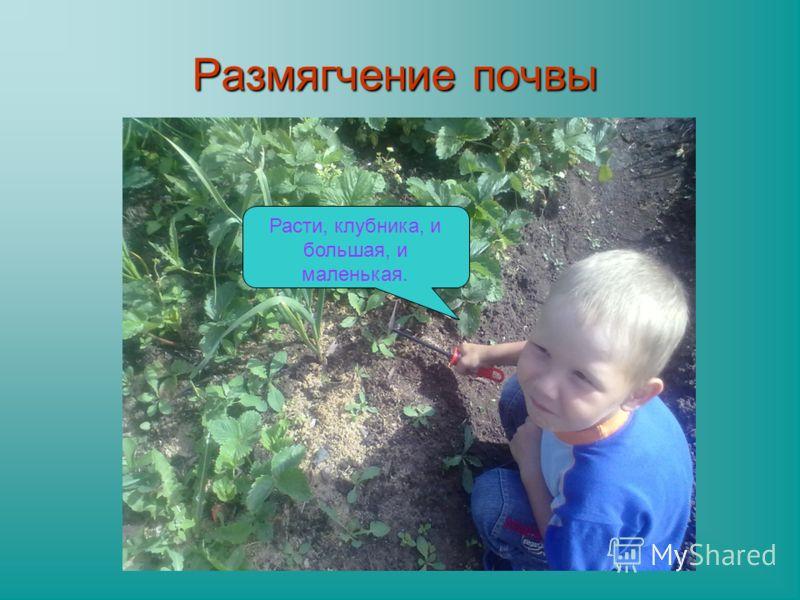 Размягчение почвы Расти, клубника, и большая, и маленькая.