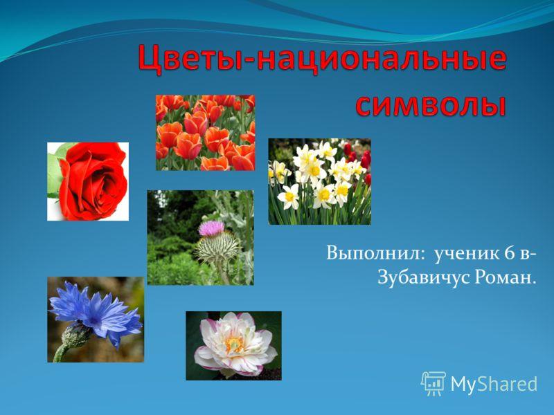 Выполнил: ученик 6 в- Зубавичус Роман.