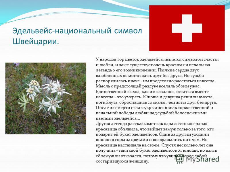 Эдельвейс-национальный символ Швейцарии. У народов гор цветок эдельвейса является символом счастья и любви, и даже существует очень красивая и печальная легенда о его возникновении. Пылкие сердца двух влюбленных не могли жить друг без друга. Но судьб