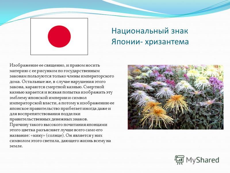 Национальный знак Японии- хризантема Изображение ее священно, и правом носить материю с ее рисунком по государственным законам пользуются только члены императорского дома. Остальные же, в случае нарушения этого закона, караются смертной казнью. Смерт