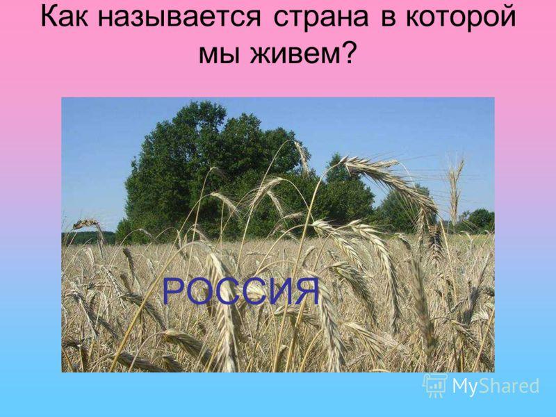 Кто является главой нашего государства? Дмитрий Медведев