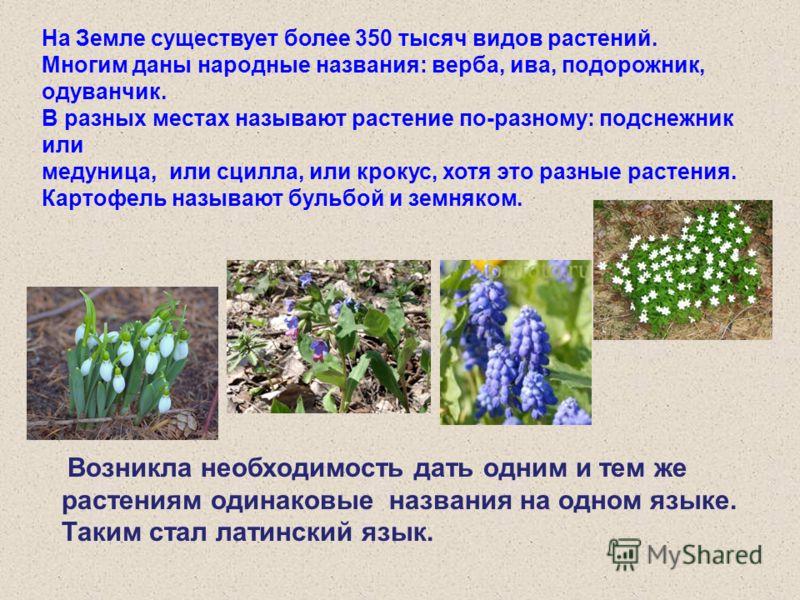 На Земле существует более 350 тысяч видов растений. Многим даны народные названия: верба, ива, подорожник, одуванчик. В разных местах называют растение по-разному: подснежник или медуница, или сцилла, или крокус, хотя это разные растения. Картофель н