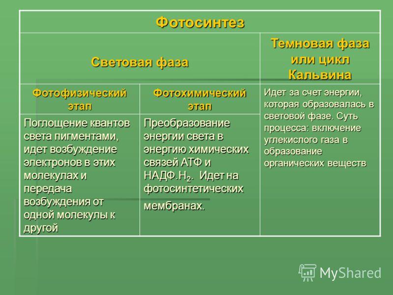 Фотосинтез Световая фаза
