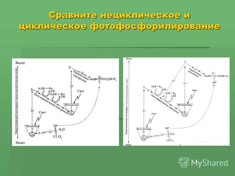 Сравните нециклическое и циклическое фотофосфорилирование
