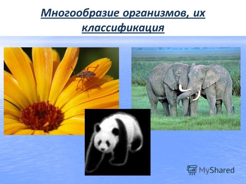 Многообразие организмов, их классификация
