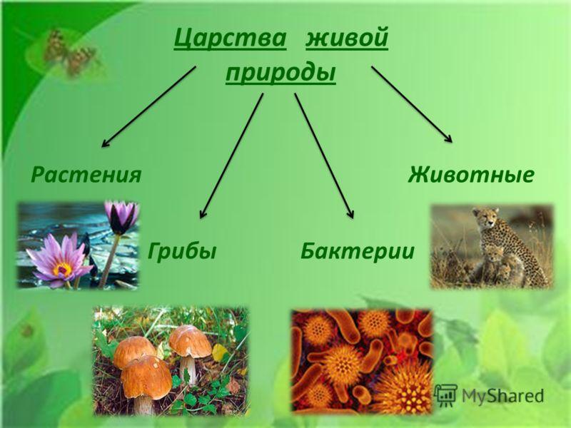 Царства живой природы РастенияЖивотные ГрибыБактерии