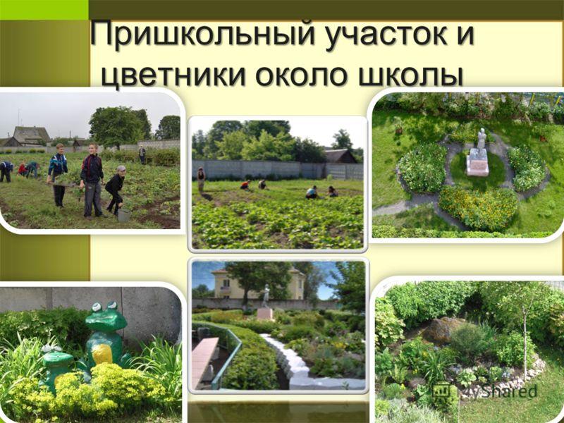 Пришкольный участок и цветники около школы