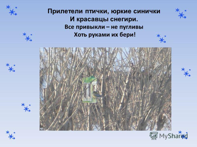 Прилетели птички, юркие синички И красавцы снегири. Все привыкли – не пугливы Хоть руками их бери!