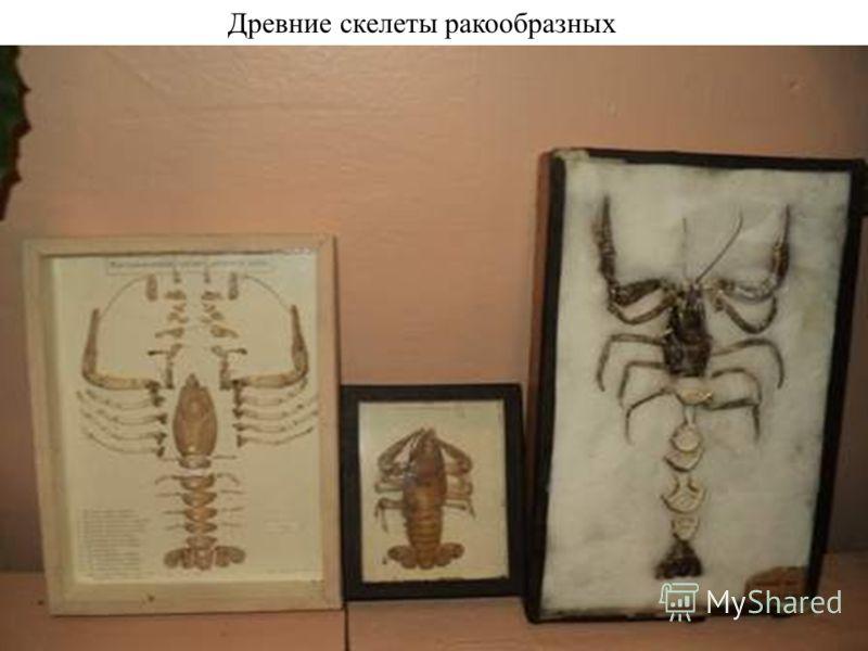 Древние скелеты ракообразных