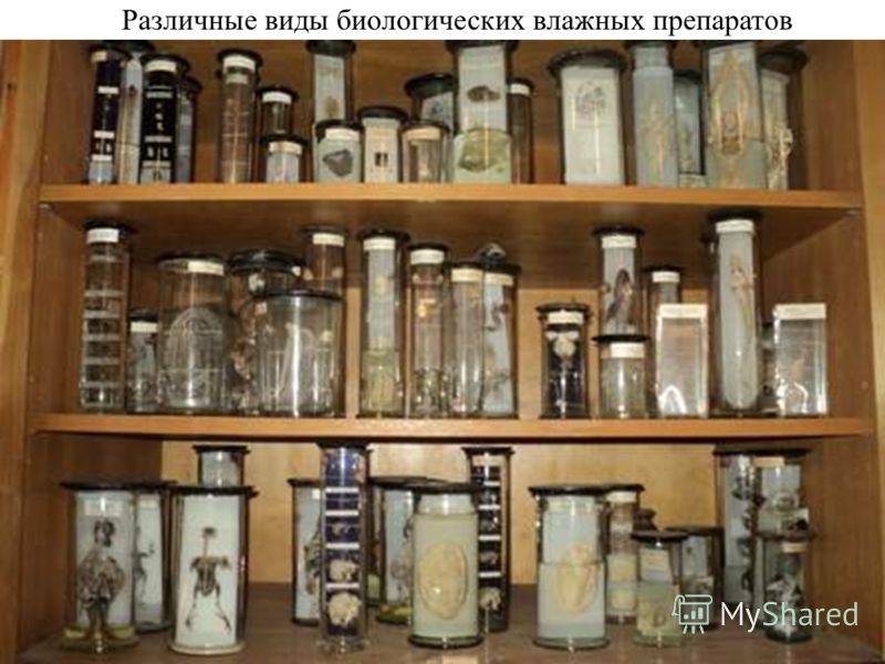 Различные виды биологических влажных препаратов